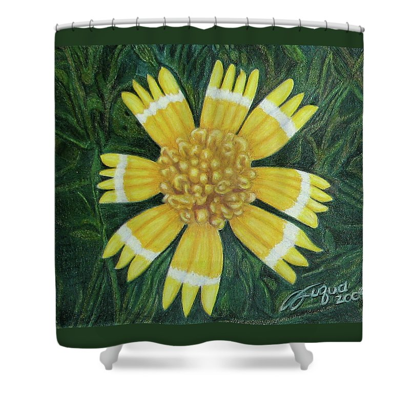 Fuqua - Artwork Shower Curtain featuring the drawing Huisache Daisy by Beverly Fuqua