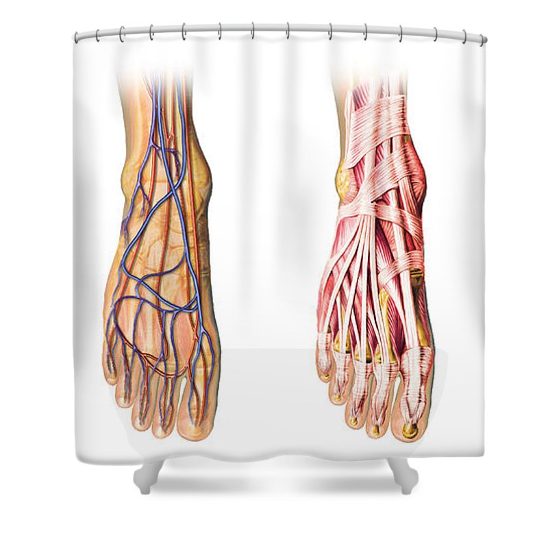 Human Foot Anatomy Showing Skin Veins Shower Curtain For Sale By