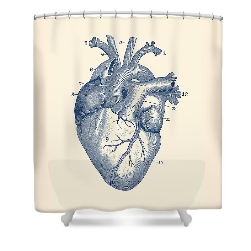 Medical Shower Curtain Featuring The Drawing Human Heart Diagram