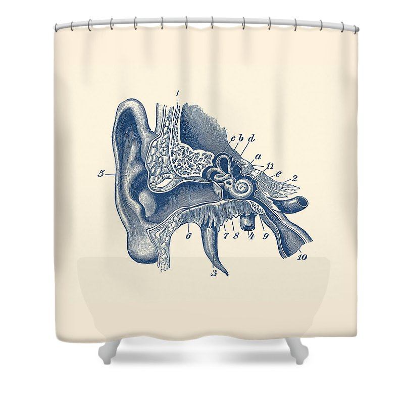 Human Inner Ear Anatomy Diagram Vintage Print Shower Curtain For