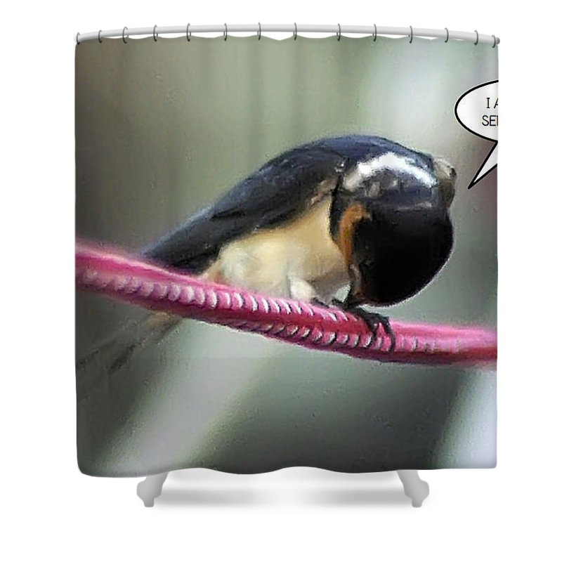 2d Shower Curtain featuring the photograph Humility by Brian Wallace