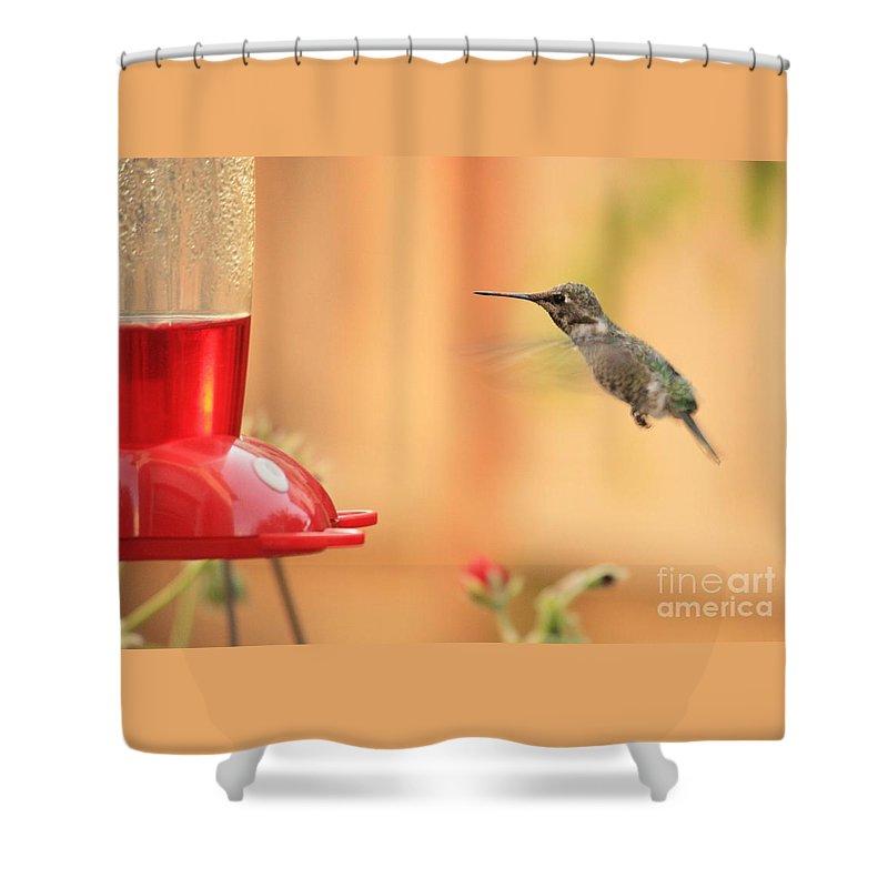 Hummingbird Shower Curtain featuring the photograph Hummingbird And Feeder by Carol Groenen