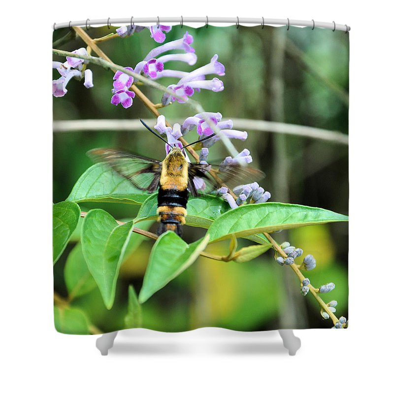 Floral Shower Curtain featuring the photograph Hummingbird Bee by Jan Amiss Photography