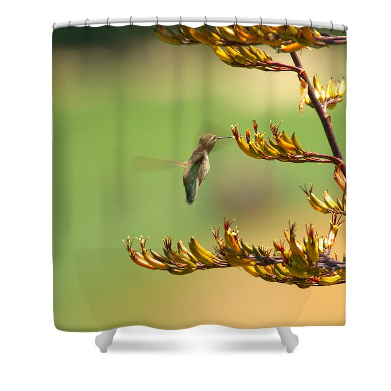 Hummingbird Bird Nature Nectar Plant Flower Botanical Shower Curtain featuring the photograph Hummingbird Drinking Nectar by Jill Reger