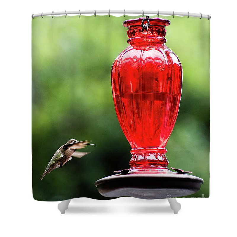 Humming Shower Curtain featuring the photograph Hummingbird Feeder by Andrew Fairfield