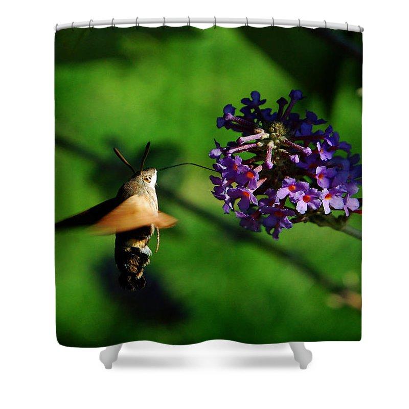 Hummingbird Hawk Moth Shower Curtain featuring the photograph Hummingbird Hawk Moth 2 by P Donovan