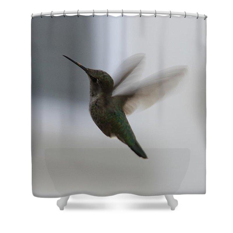 Hummingbird Shower Curtain featuring the photograph Hummingbird In Flight by Carol Groenen