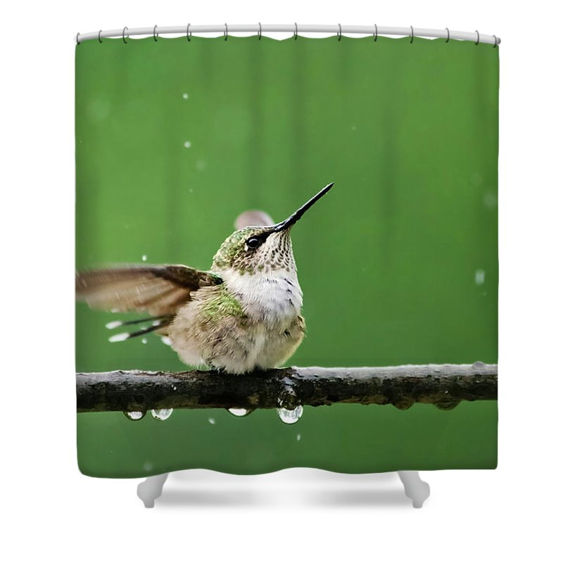Hummingbird Shower Curtain Featuring The Photograph In Rain By Christina Rollo