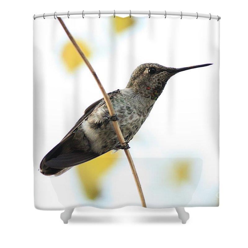 Hummingbird Shower Curtain featuring the photograph Hummingbird On Tightrope by Carol Groenen