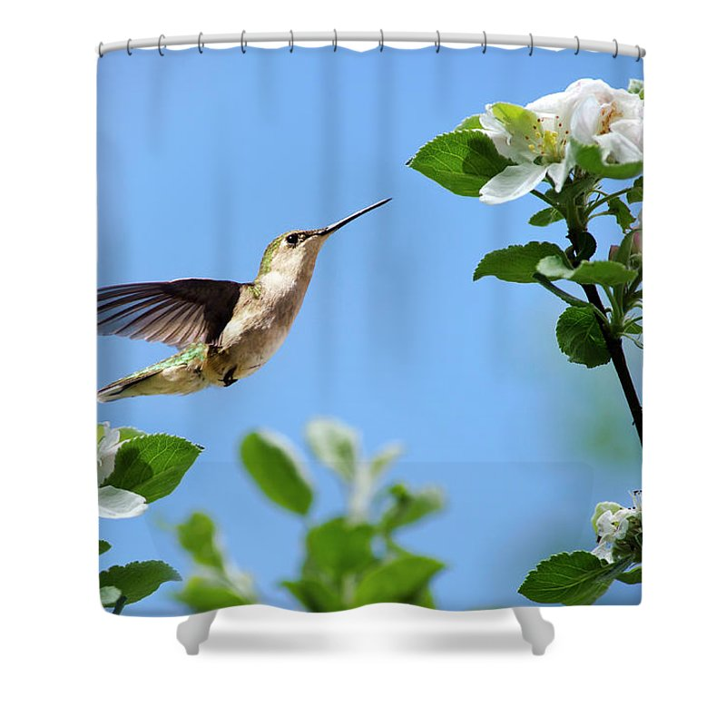 Hummingbird Shower Curtain featuring the photograph Hummingbird Springtime by Christina Rollo