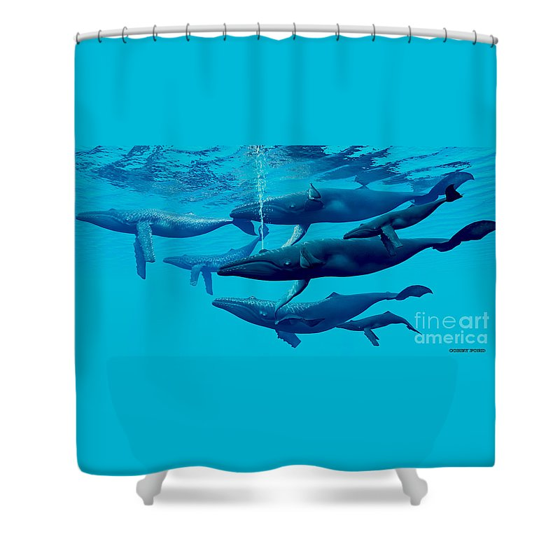 Humpback Whale Shower Curtain Featuring The Painting Group By Corey Ford