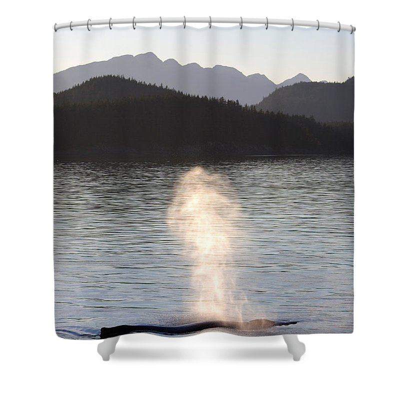 One Animal Shower Curtain featuring the photograph Humpback Whale Megaptera Novaeangliae by Ralph Lee Hopkins