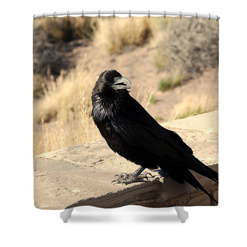Crow Shower Curtain featuring the photograph Hungry Crow by Susanne Van Hulst