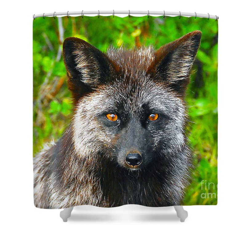 Gray Fox Shower Curtain featuring the photograph Hungry Eyes by David Lee Thompson