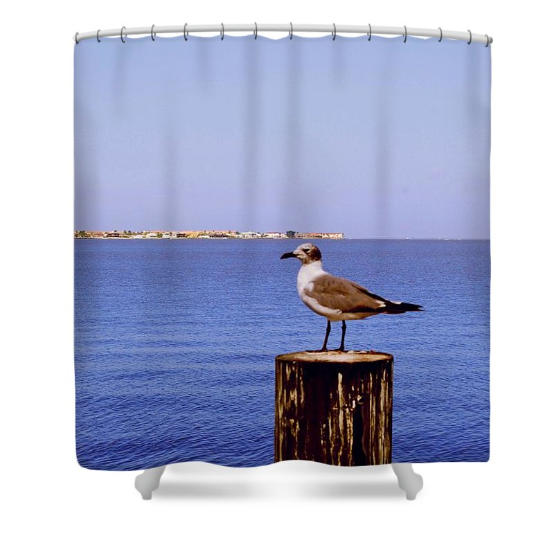 Sea Gull Shower Curtain featuring the photograph Hungry Sea Gull by Gary Wonning