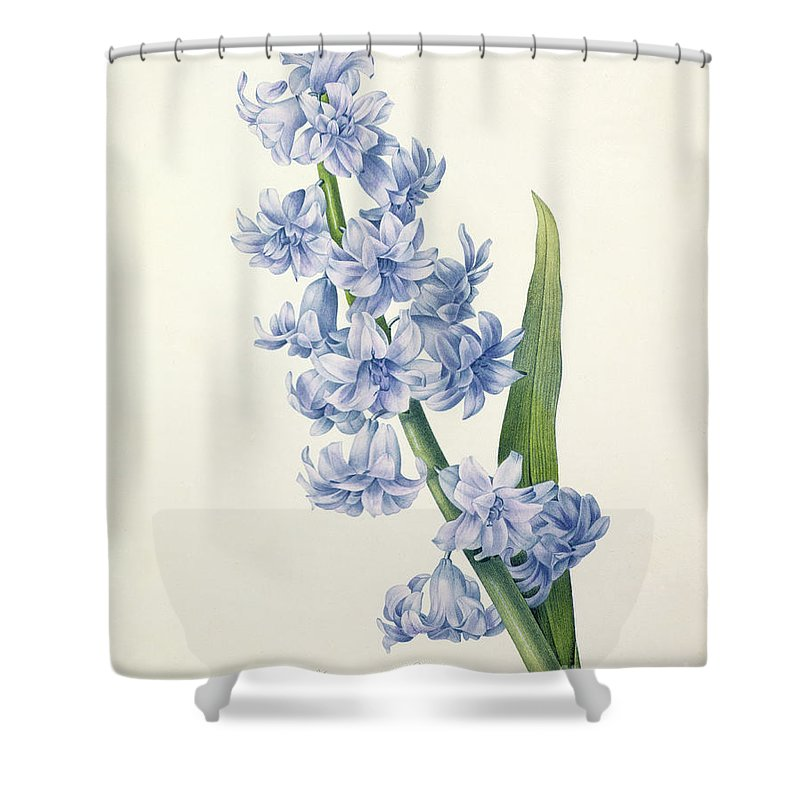 Hyacinthus Shower Curtain featuring the drawing Hyacinth by Pierre Joseph Redoute