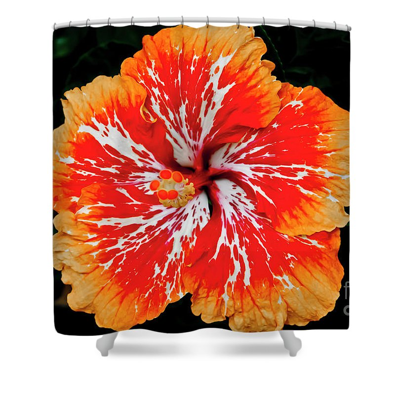 Flower Shower Curtain featuring the photograph Hybrid Hibiscus II Maui Hawaii by Jim Cazel