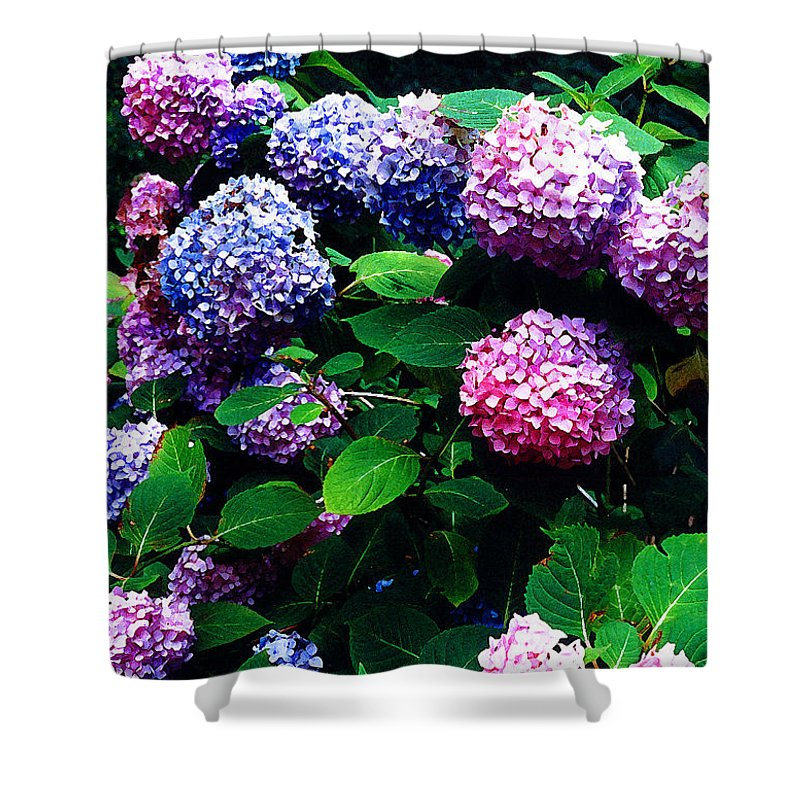 Flowers Shower Curtain featuring the photograph Hydrangeas by Nancy Mueller