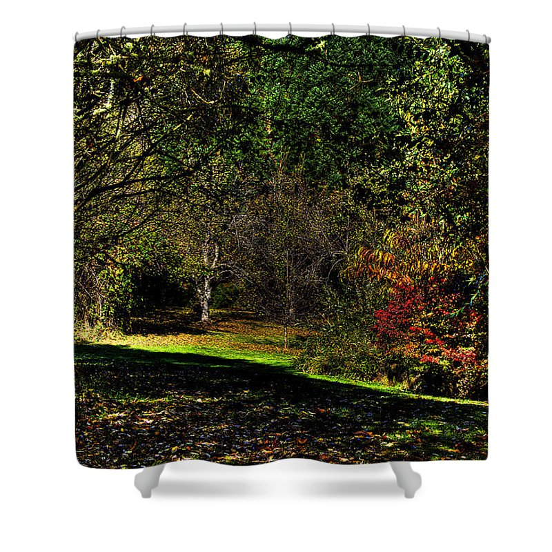 West Hylebos Wetlands Shower Curtain featuring the photograph Hylebos In Autumn by David Patterson