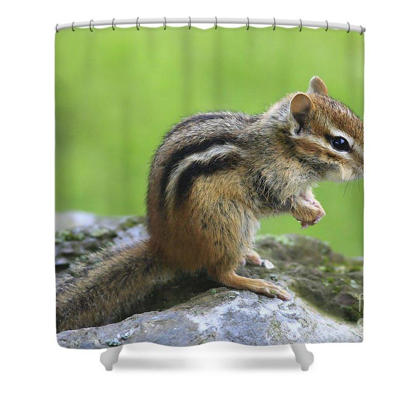Chipmunk Shower Curtain featuring the photograph I Am Just So Cute by Deborah Benoit