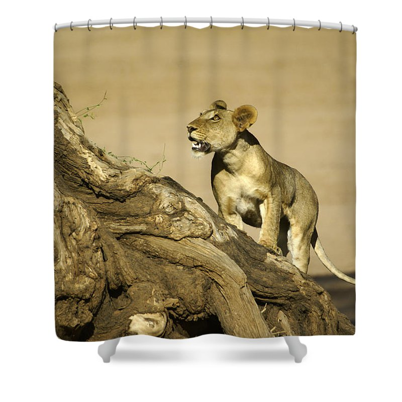 Africa Shower Curtain featuring the photograph I Can Do This by Michele Burgess