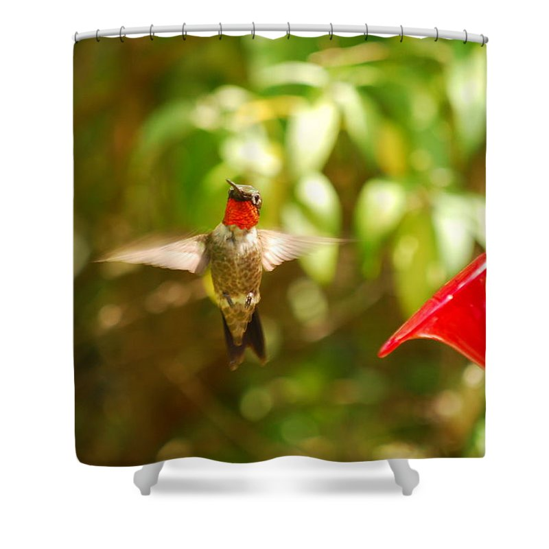 Hummingbird Shower Curtain featuring the photograph I Can Fly by Lori Tambakis