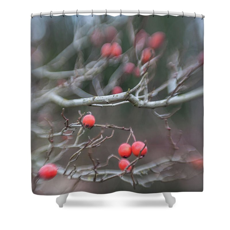 Red Berry Shower Curtain featuring the photograph I Dont Think I Was Supposed To Eat Those by Scott Campbell