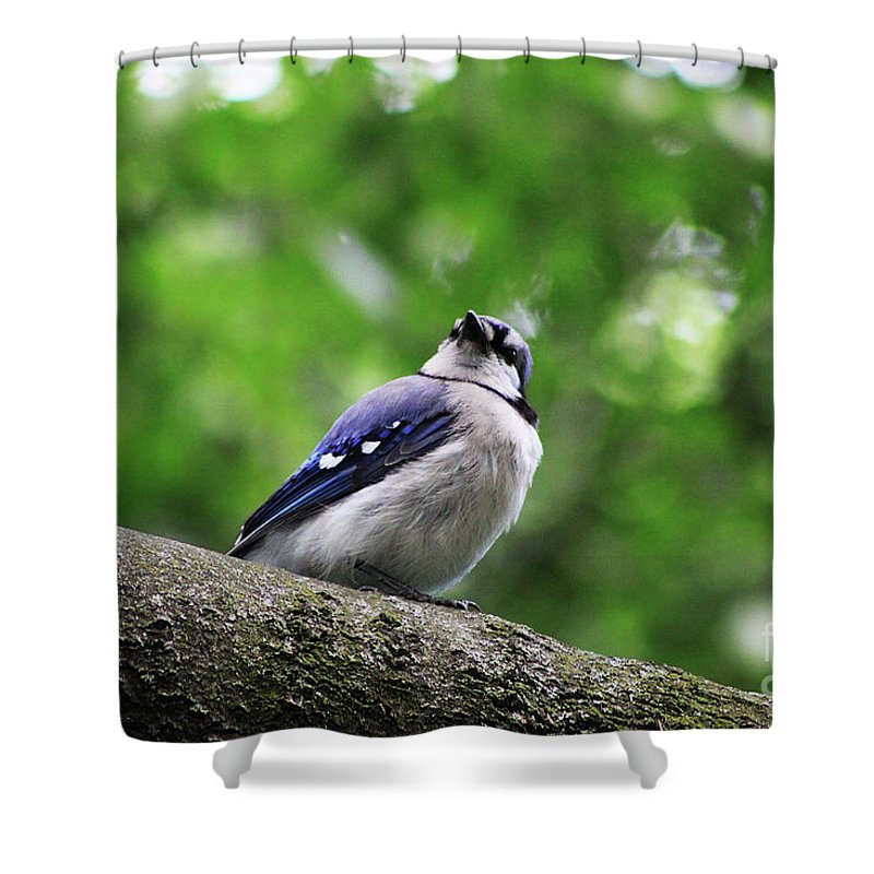 Bluejay Shower Curtain featuring the photograph I Hear Something by Alyce Taylor