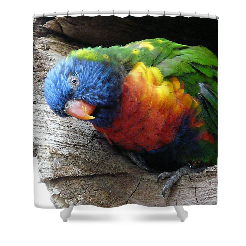 Bird Shower Curtain featuring the photograph I Hear You by Valerie Ornstein