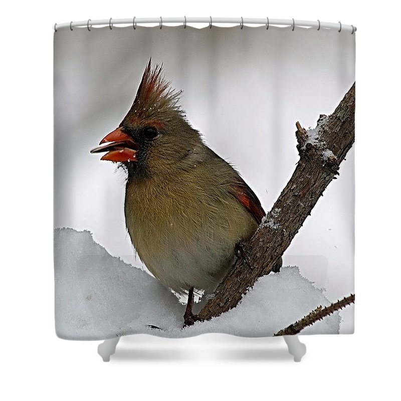 Bird Shower Curtain featuring the photograph I Love Seeds by Gaby Swanson