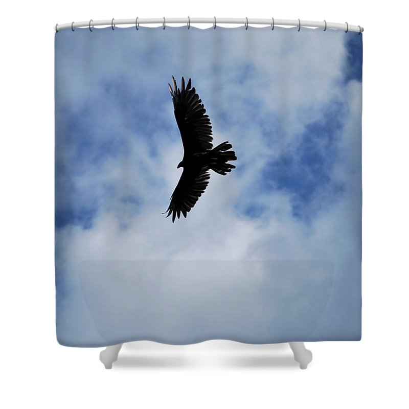 Bird Shower Curtain featuring the photograph I Love The View From Up Here by Lori Tambakis