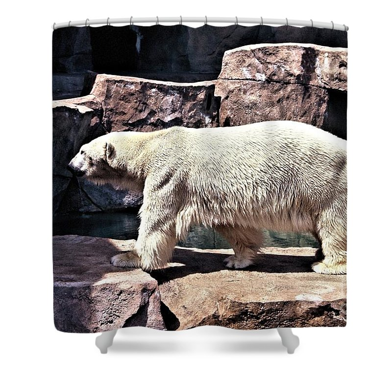 Milwaukee County Zoo Shower Curtain featuring the photograph I Really Need To Cool Off by Tommy Anderson