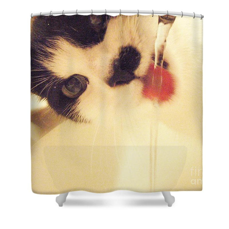 Cat Water Black White Tongue Pink Love Shower Curtain featuring the photograph I See You by Kristine Nora