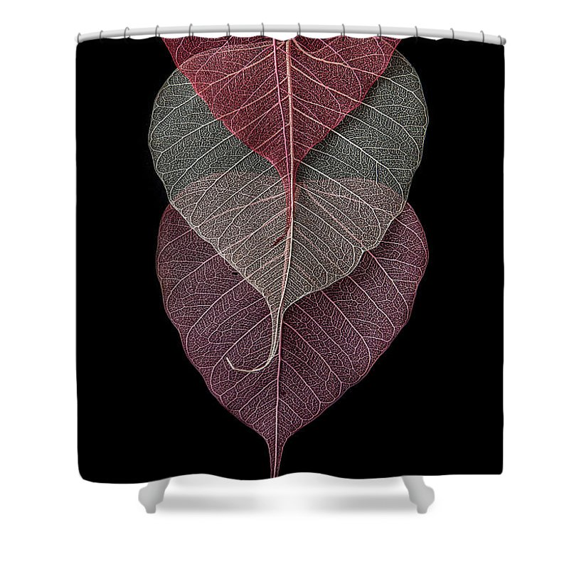 Leaves Shower Curtain featuring the photograph I See You by Maggie Terlecki
