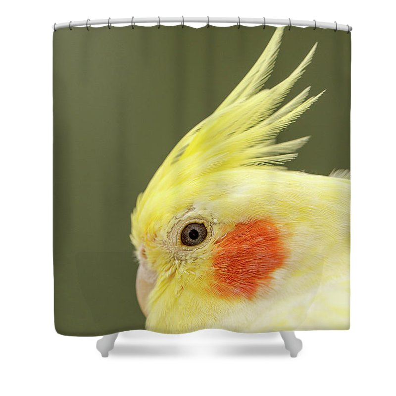 Yellow Budgies Shower Curtain featuring the photograph I See You by Maria Ollman
