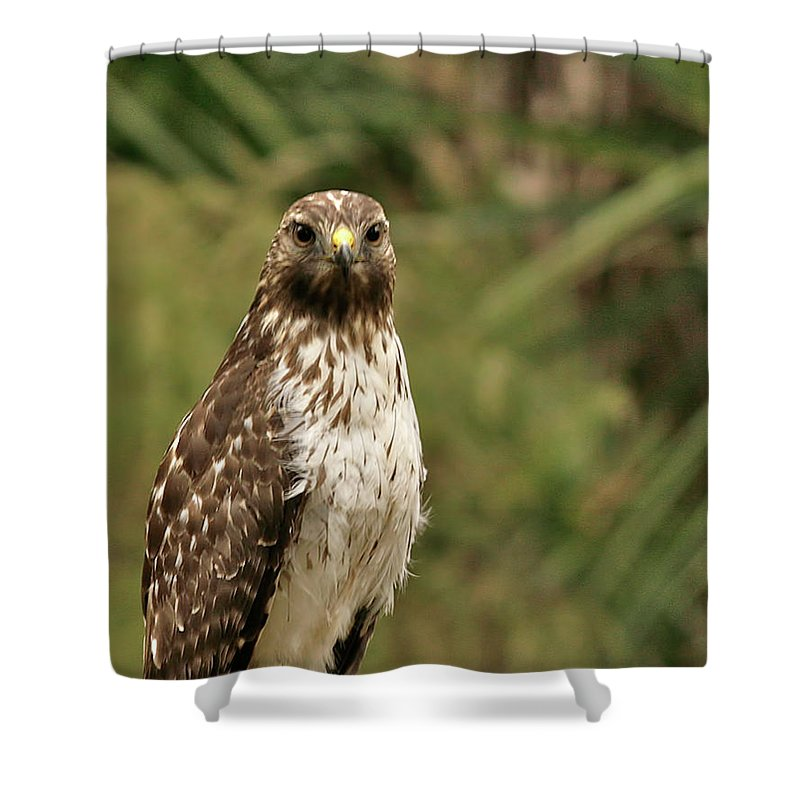 Bird Shower Curtain featuring the photograph I See You by Phill Doherty