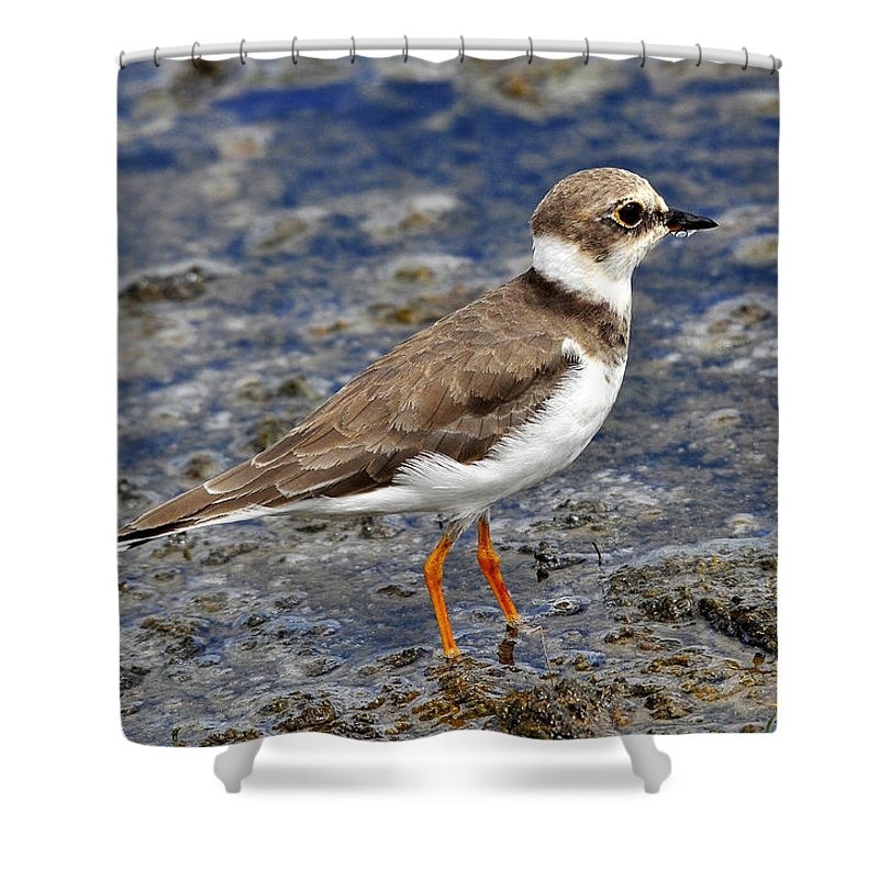 Long-bill-plover Shower Curtain featuring the photograph I Thirst by Joseph Franco