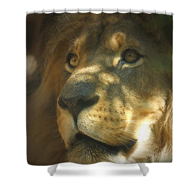Lion Shower Curtain featuring the photograph I Want Some by Ernie Echols