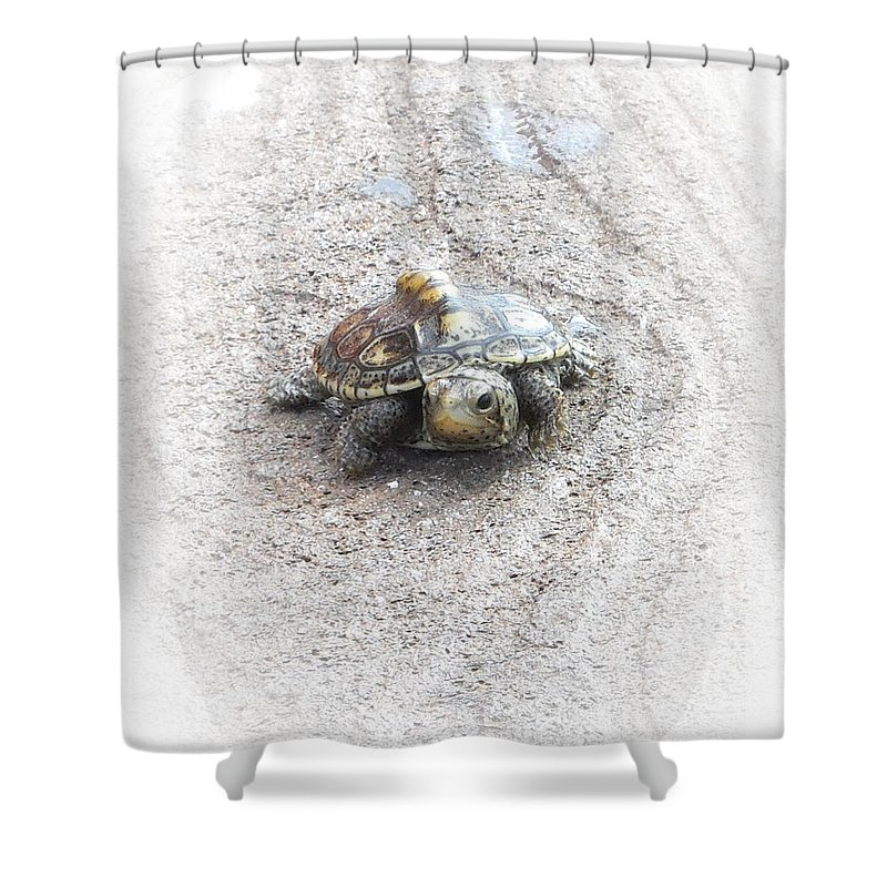Turtle Shower Curtain featuring the photograph I Will Survive by Judy Hall-Folde