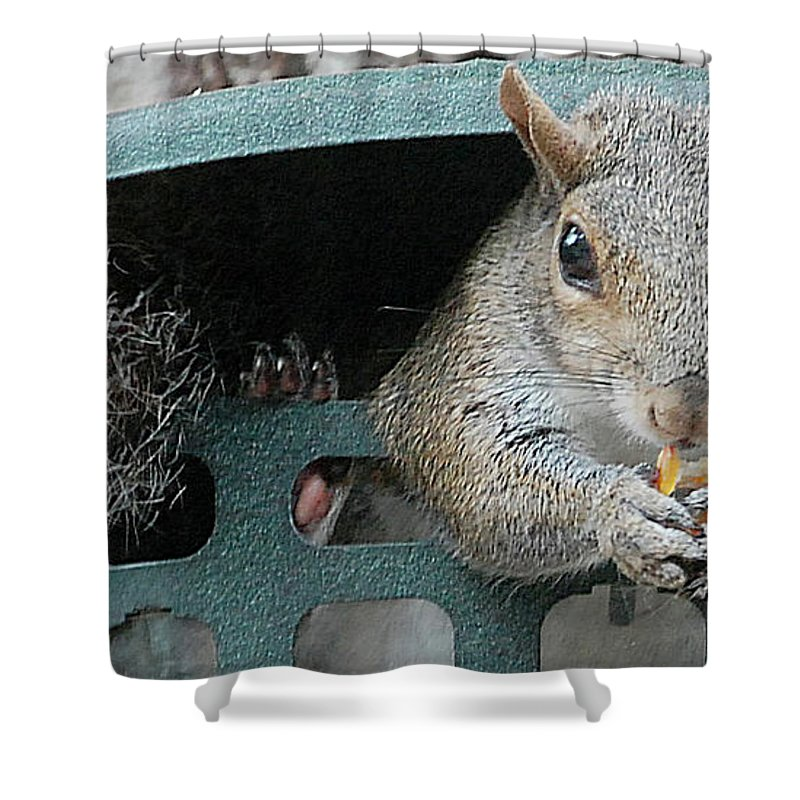 Squirrel Shower Curtain featuring the digital art I Would Rather Dine Alone by DigiArt Diaries by Vicky B Fuller