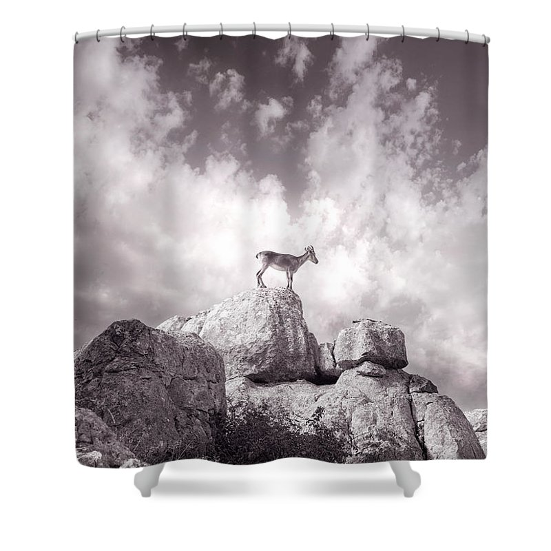Ibex Shower Curtain featuring the photograph Ibex -the Wild Mountain Goats In The El Torcal Mountains Spain by Mal Bray