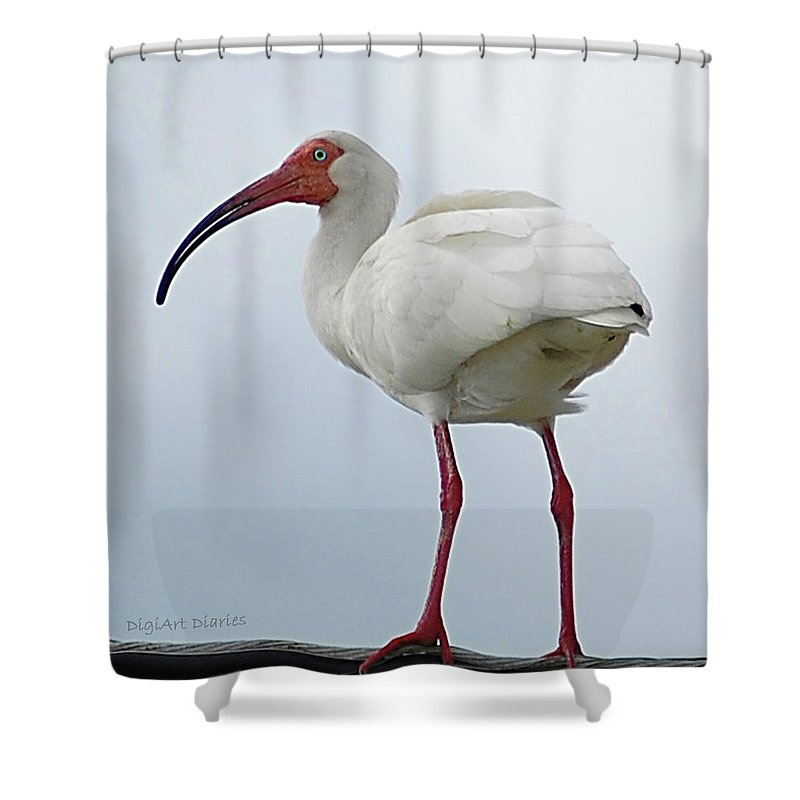 Bird Shower Curtain featuring the digital art Ibis In The Morning by DigiArt Diaries by Vicky B Fuller