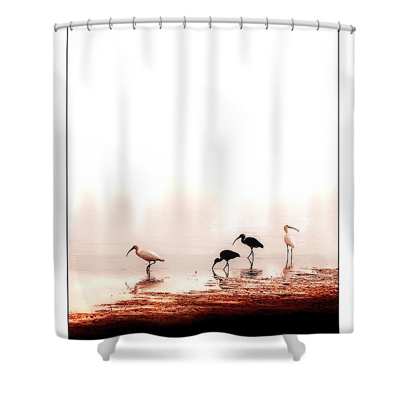 Ibis Shower Curtain featuring the photograph Ibis by Mal Bray