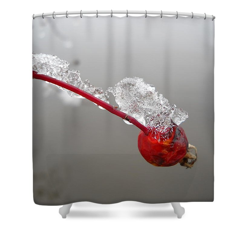 Rose Hip Shower Curtain featuring the photograph Ice Covered Wild Rose Hip by Kent Lorentzen
