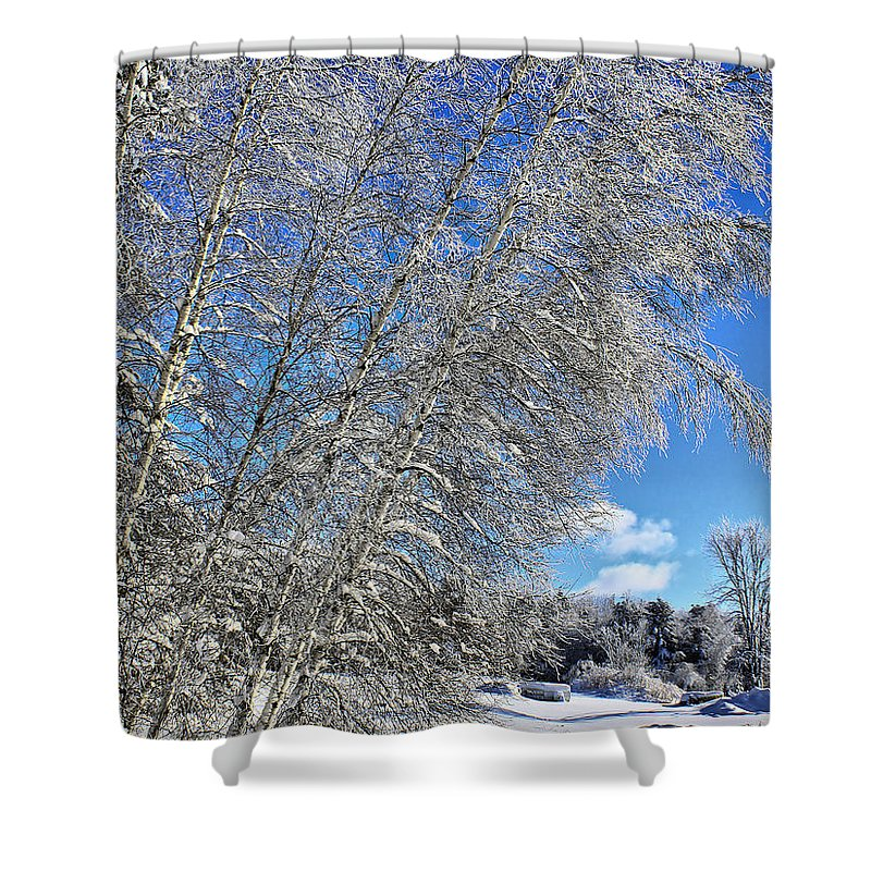 Snow Shower Curtain featuring the photograph Ice Laden Birches by Deborah Benoit
