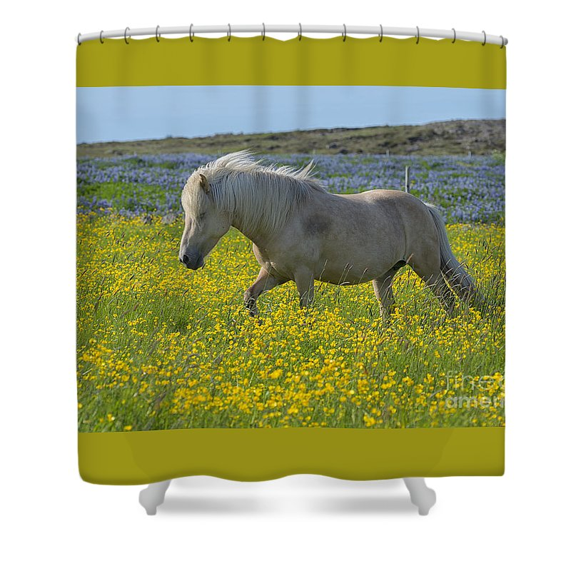 Icelandic Horses Shower Curtain featuring the photograph Icelandic Horse, Iceland by Ivan Batinic