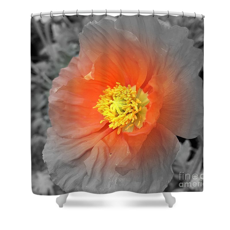 Flower Shower Curtain featuring the photograph Icelandic Poppy by Pruddygurl Exclusives