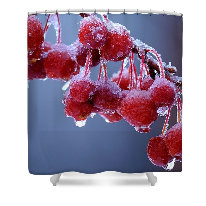 Winter Shower Curtain featuring the photograph Icy Berries by Lisa Kane
