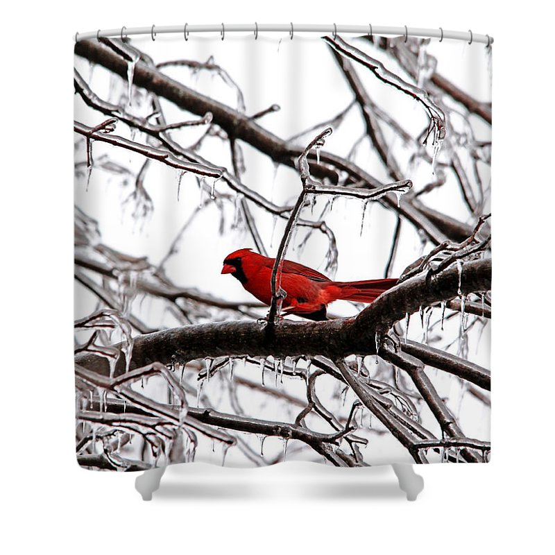 Northern Red Cardinal Shower Curtain featuring the photograph Icy Perch by Debbie Oppermann