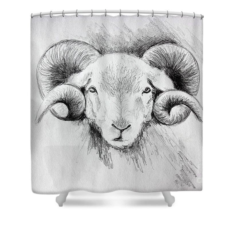 Animal Shower Curtain Featuring The Drawing Idaho Longhorn Sheep Head By Pechez Sepehri